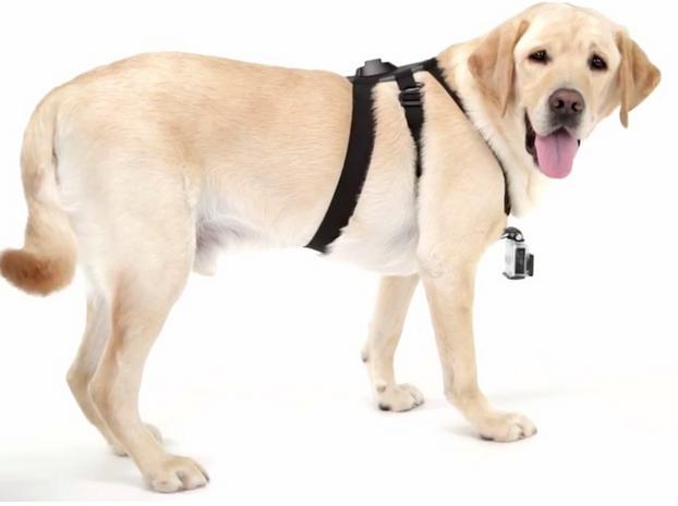 gopro dog